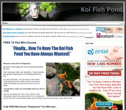 koi fish for beginners